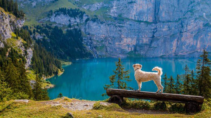 Hund og utsikt